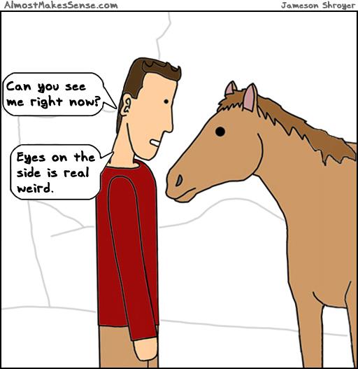 Horse Eyes Side