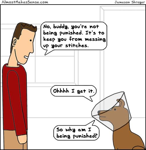 Dog Cone Punished
